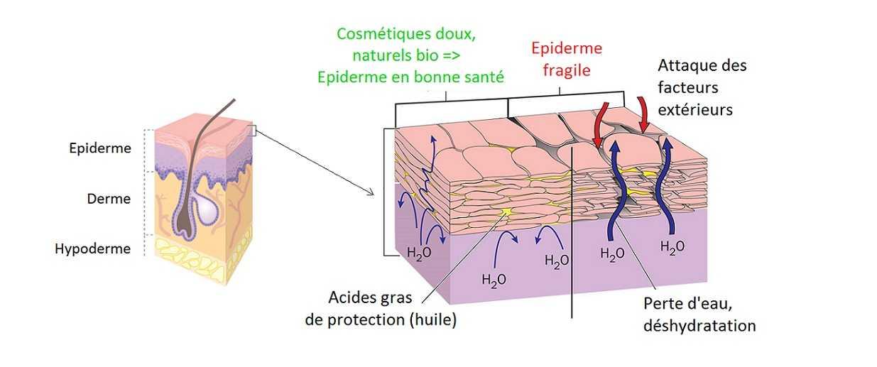 cosmétiques bio - protection de la peau