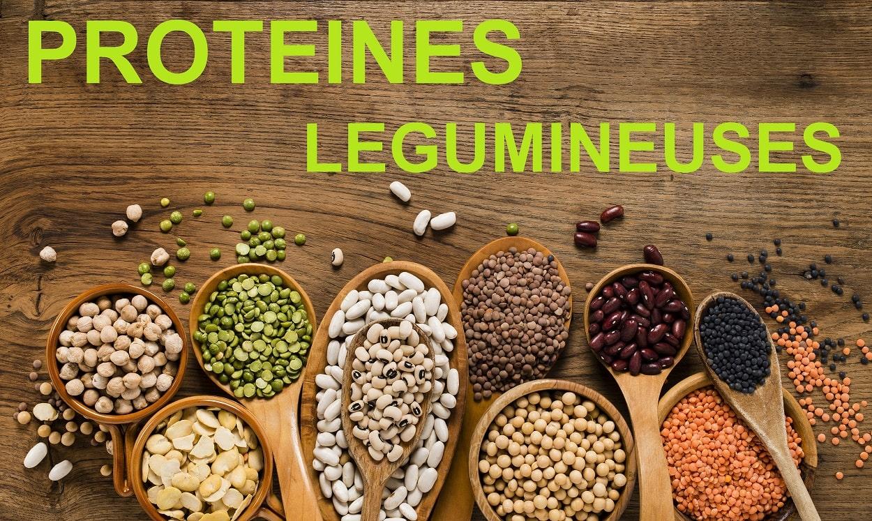 legumineuses - proteines
