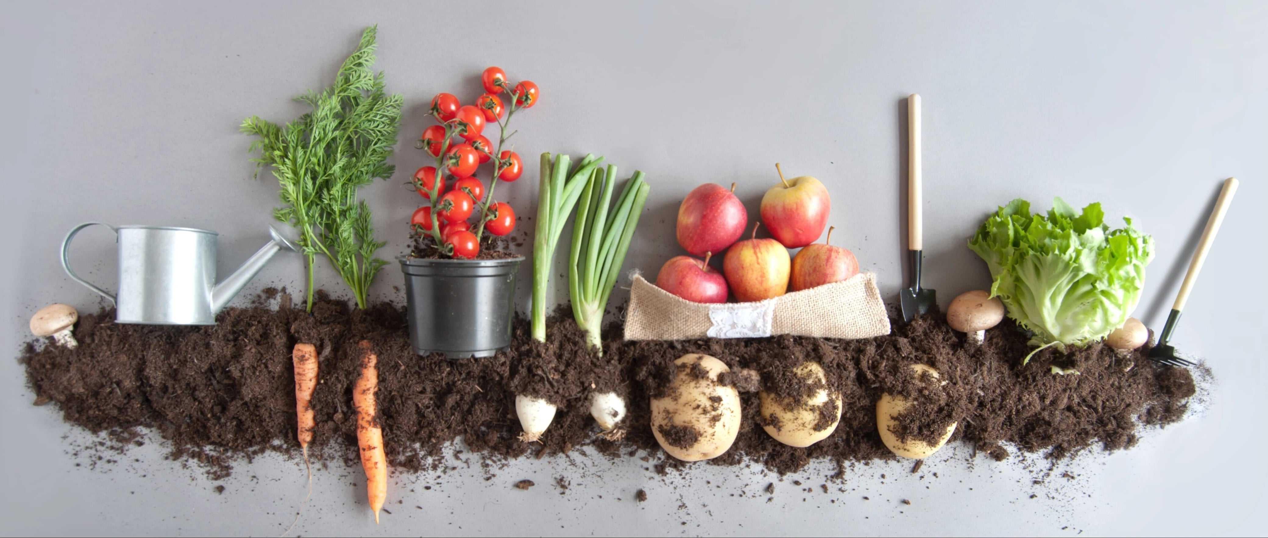 produits biologiques - alimentation saine - legumes - fruits